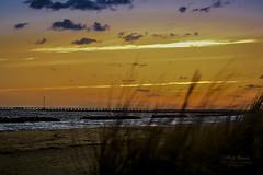 Awakening (White Balance Imaging Photography) Tags: beachocean dogs fauna nature oceanview places sunrise weather