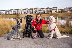 Group shot (calgaryactivek9s) Tags: dogs dogwalker calgary copperfield blueheeler heeler goldendoodle pond pooches blacklab labradorretriever retriever labrador