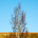 Tree and Roof