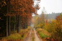 paths and roads (JoannaRB2009) Tags: path road nature autumn fall rain rainy wet humid tree trees sand mist fog dzkie lodzkie polska poland landscape view forest woods