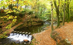 Tollymore Forest Park, County Down, Northern Ireland (east med wanderer) Tags: northernireland countydown tollymoreforestpark newcastle forest trees steppingstones river shimnariver autumn ireland uk ulster