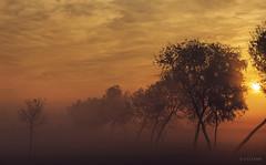 Golden Light (xeeart) Tags: sunrise village villagelife morning mist fog clouds light people punjab pakistan culture winters winter travel trees tree rays
