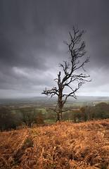 Death of Autumn (Sarah_Brooks) Tags: dorset lambertscastle tree deadtree death autumn braken raincloud rain cloud moody lonetree