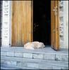 Rollie goes Rotterdam (05) (Hans Kerensky) Tags: rollei rolleiflex t model 3 tlr tessar 135 75mm lens kodak portra 160 film scanner plustek opticfilm 120 rotterdam october 2016 greekorthodox church agios nikolaos gatekeeper dog