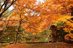 (katsuzin13) Tags: gifu takayama takayamacastleruins fall autumn autumnleaves