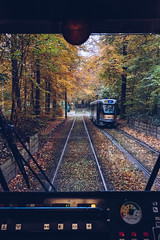 Autumn in Tervuren from Tram 44 (tanjatiziana) Tags: belgium brussels bruxelles tervuren tram 44 publictransit park autumn