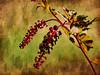 Pokeberry (bethrosengard) Tags: bethrosengard photomanipulation digitallyenhanced photoart digitalmagic digitalart