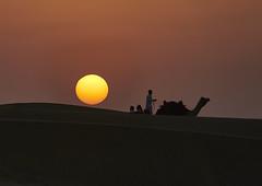 Sunset in the desert (swissukue) Tags: india sunset camels sand jaisalmer desert
