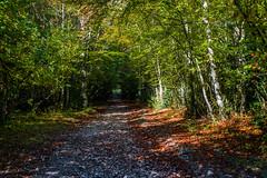 Otoo Valle de Pineta (soniagu) Tags: pineta pirineos huesca otoo naturaleza