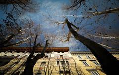 Mild winter in Trieste, Italy (monsieur I) Tags: trieste blue bluesky discover housings inverno italia italianstyle italy monsieuri street travel winter