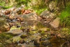 Bosque 3 Parque Cocalan_MAV4432 (http://cargocollective.com/MacarenaAltayo) Tags: bosque parque palmas de cocalan