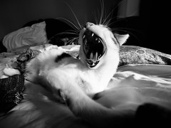 Ella's whiskers (Garen M.) Tags: wideangle cat olympusomdem1 zuikopro714mmf28 ella