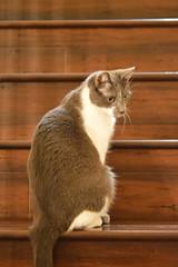 DSC_0078 (kaymann+l+woo) Tags: catsofinstagram cats cute