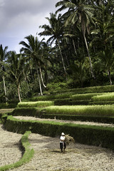 IMG_1006 (Chesterman) Tags: trip travel bali white black color portraits canon indonesia eos java mark ii 5d mm colori 85 f28 f12 2470