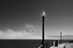 fly away (amira_a) Tags: sanfrancisco sea blackandwhite bw lamp clouds bay nikon post seagull gull d5100