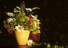friday flowers (rafischatz... www.rafischatz-photography.de) Tags: flowers garden pentax gardening bunch vase arrangement tamron70300 k200d