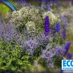 5 The Ecover Garden at Hampton Court Flower Show thumbnail