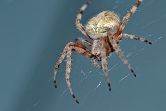 Spider2 (Jeremy Riddle) Tags: macro closeup bug insect spider nikon web sigma105 d3100