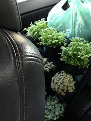 ทำสวนในรถ