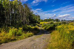 IMG_1795 (timbast_) Tags: road flowers blue trees sky plants sun plant flower tree green yellow clouds forest landscape sand sandy sunny uwa