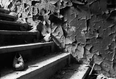 31 (M. SCHULZ) Tags: exa 1b canon 9000f kodak bw 400 cn analog leipzig general olbricht kaserne 35mm lost places deutschland germany sachsen saxony film ihagee schwarz weis black white sw iso analogue