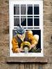 False Window - Knaresborough (Nigel_Brown) Tags: uk greatbritain england window lumix unitedkingdom yorkshire panasonic gb knaresborough stockphoto 2013 nigelbrown dmctz8 falsewindow tz8