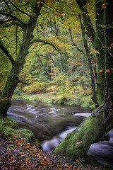 River View (Richard Davy - The World As I See It) Tags: autumn trees red green leaves yellow river flow moss stream colours framed rapids flowing