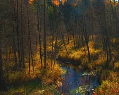 autumn stream (-liyen-) Tags: autumn nature water rural forest woods stream deadtrees challengeyouwinner cyunanimous