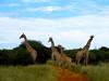 Namibia Safari - Lake Lodge 17