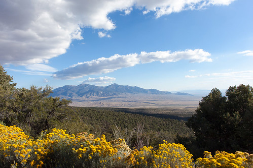 Rabbitbrush Below _8538