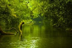 Wilderness of Coorg (Shreyas Jayappa) Tags: green nature 1855mm karnataka kaveri coorg kodagu nisargadhama mercara canoneos500d coorgwildlife