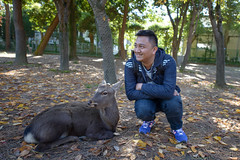 - Nara Japan (J.D Chen ) Tags: park trip travel vacation japan nikon tour jr deer   osaka nara backpacker todaiji  narapark       jr d80