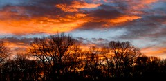 Sky on Fire (Koru Foto/Alan Szalwinski) Tags: trees sunrise colorado beautifullandscape chatfieldstatepark