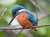 My First Kingfisher! (Pete Fletcher Photography) Tags: