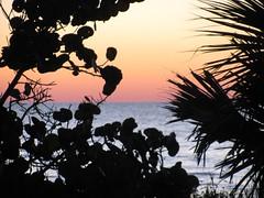 Honeymoon Island, Florida (florida-beachrentals.com) Tags: sunset beach gulfofmexico florida mangrove palmtree dunedin clearwater honeymoonisland