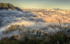 A cloudy carpet (Fil.ippo (AWAY)) Tags: panorama cloud weather indonesia landscape carpet java nuvole cloudy filippo paesaggio tengger tappeto d5000 filippobianchi