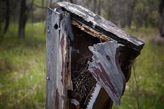 exposed (drew*in*chicago) Tags: chicago macro nature dof bokeh bee honey micro 2014 northparknaturecenter