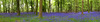 grovelly woods,bluebells (fishfish_01) Tags: