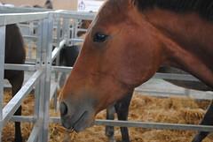 Exposición, feria del caballo en Jerez de la Frontera.