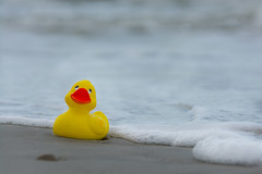 "Duck at the beach (le cabri) Tags: travel summer usa beach water toy duck sand bath florida tube wave plastic ""yellow ""bath toy"" duck"""