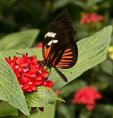 Vlindertuin Berkenhof 5 (marjaNoor) Tags: nederland zeeland kwadendamme