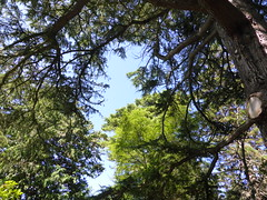 Leckmelm (IrenicRhonda) Tags: plant tree public june woodland geotagged scotland highlands unitedkingdom escocia done schottland ecosse 2014 gbr braemore highlandsandislands p4m leckmelm redbubble lascozia  westerrossstrathpefferandlo westerrossstrathpefferandlochalshward geo:lat=5787133611 geo:lon=510087778