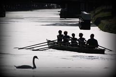 IMG_3173 (Hans Heijnen) Tags: dds regatta