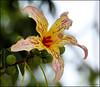(2354) Flower (QuimG) Tags: flower macro natura nature naturaleza nikon quimg quimgranell joaquimgranell afcastelló specialtouch obresdart
