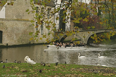 Beloved Brugge (Natali Antonovich) Tags: belovedbrugge brugge bruges belgium belgie belgique oldtown oldtime oldworld oldest water swans birds architecture tourists travelers spectators lifestyle pensiveautumn autumn style tradition