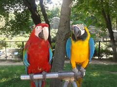 Beautiful birds (BethGrand) Tags: parrots birds moldovazoo moldova beautiful colours