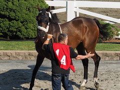 J. C. Indy (avatarsound) Tags: boston suffolkdowns horse horseracing jockey race racetrack racing