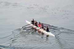 Frankfurt am Main - Rudern auf dem Main (CocoChantre) Tags: achter deutschland europa flus frankfurtammain hessen landschaft main paddel ruderboot ruderer sport welt rudern de