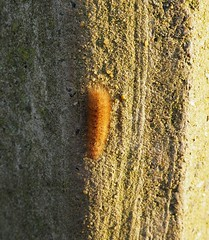 caterpillar on triangulation point (debs-eye) Tags: devilsdyke southdowns trigpoint caterpillar