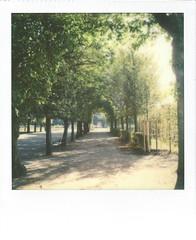 Schlosspark Schonbrunn (Sophort) Tags: color600 polaroid vienna schnbrunn palace wien summer slr680 impossibleproject theimpossibleproject polaroidcamera